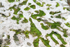 Moss on white coral rock close up. Green moss on white coral rock from miami Stock Photo