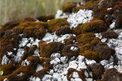 Moss on white stone stock images