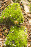 Moss. Who was born on the old bricks and stones on it Stock Photo