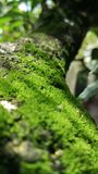 Moss. Wild life photography Royalty Free Stock Photos