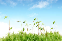 Free Moss With Sky Royalty Free Stock Image - 13984426