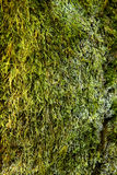 Moss and withe fungus Royalty Free Stock Photos