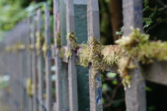 Moss on a wood fence Royalty Free Stock Photography
