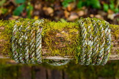 Moss on wood. Moss glow up on wood in forest,Close up shot Royalty Free Stock Image