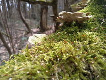 Moss. Wood mushrooms,  Spring. Nature,  forest Stock Photo