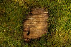 Moss and wood pattern royalty free stock photo