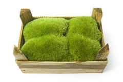 Moss in a wooden box Stock Photo