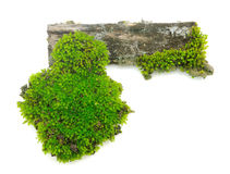 Moss on a wooden stump on white background Royalty Free Stock Images