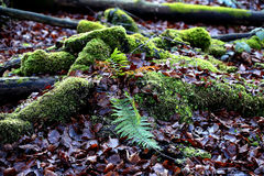 Moss in the woods Stock Photography