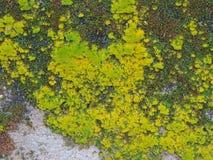 moss zielone Obrazy Royalty Free
