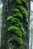 Mossa är på ett träd i skället med fuktighet royaltyfria foton
