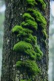 Mossa är på ett träd i skället med fuktighet arkivbilder