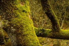 Mossa över träd i höst royaltyfri bild