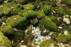 Mossa för bakgrundsnaturgräsplan på stenblocken, höstsidor och en pöl av vatten Royaltyfria Bilder