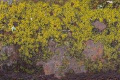 Mossa för grön form på metallväggen Fotografering för Bildbyråer