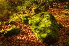 Mossa för höstlandskapgräsplan på stenarna bland lövverket royaltyfria foton