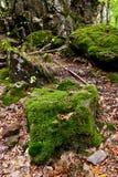 Mossa-fullvuxna stenblock i Kaukasus berg Royaltyfria Foton