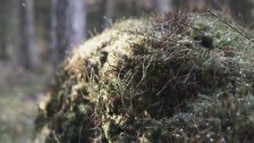 Mossa i en skog stock video