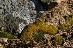 Mossa i sten Arkivfoto