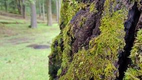 Mossa i träd Arkivbilder