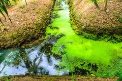 Mossa i vattenavloppsränna Arkivfoto