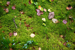 Mossa med höstskogen Royaltyfria Bilder
