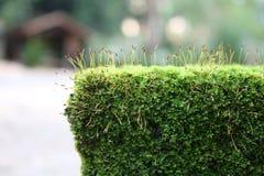 Mossa och alger vaggar på Royaltyfri Bild
