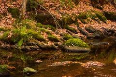 Mossa och brunt för höstladnscapegräsplan lämnar nästan en flod Ujaperos arkivfoton
