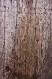 Mossa och formen påverkar träplankor Arkivfoto