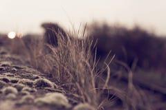 Mossa och gräs som växer på väggen med gammal tappningblick och känsel arkivfoto