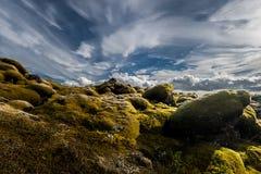 Mossa och himmel Arkivfoto