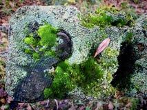 Mossa- och lavtexturer överst av staketstolpen Arkivbilder