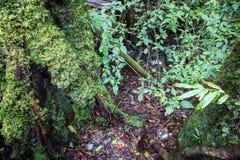 Mossa och ormbunke i det tropiskt royaltyfria bilder