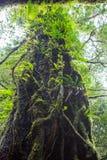 Mossa och ormbunke i det tropiskt royaltyfri foto