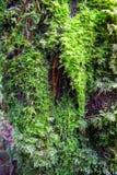 Mossa och ormbunke i rainforesten, nord av Thailand royaltyfria bilder