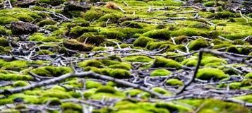 Mossa och pinnar på tak arkivbilder