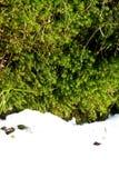 Mossa- och snösvartskog royaltyfri bild