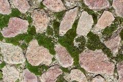Mossa och stenar Royaltyfria Bilder