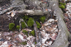 Mossa och torkar sidor nära ett träd Royaltyfri Fotografi