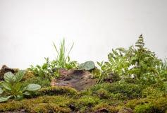 Mossa och växter på vit bakgrund Arkivbild