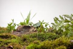 Mossa och växter på vit bakgrund Arkivfoton