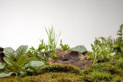 Mossa och växter på vit bakgrund Royaltyfri Bild