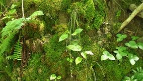 Mossa och växter växer på kullen Arkivbild