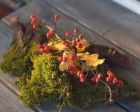 Mossa och viburnum Royaltyfri Foto