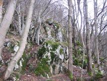Mossa på berget Fotografering för Bildbyråer