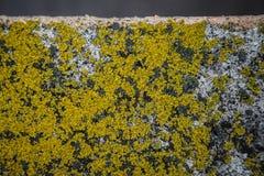 Mossa på betongen Fotografering för Bildbyråer