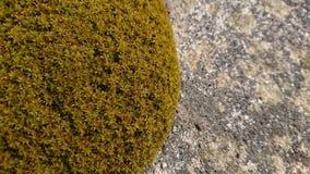 Mossa på cement royaltyfri fotografi