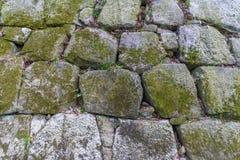 Mossa på den steniga väggen för slott Arkivfoto