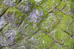 Mossa på det gammalt vaggar väggen Fotografering för Bildbyråer