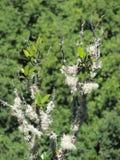 mossa på en växt med en suddig bakgrund Arkivfoto
